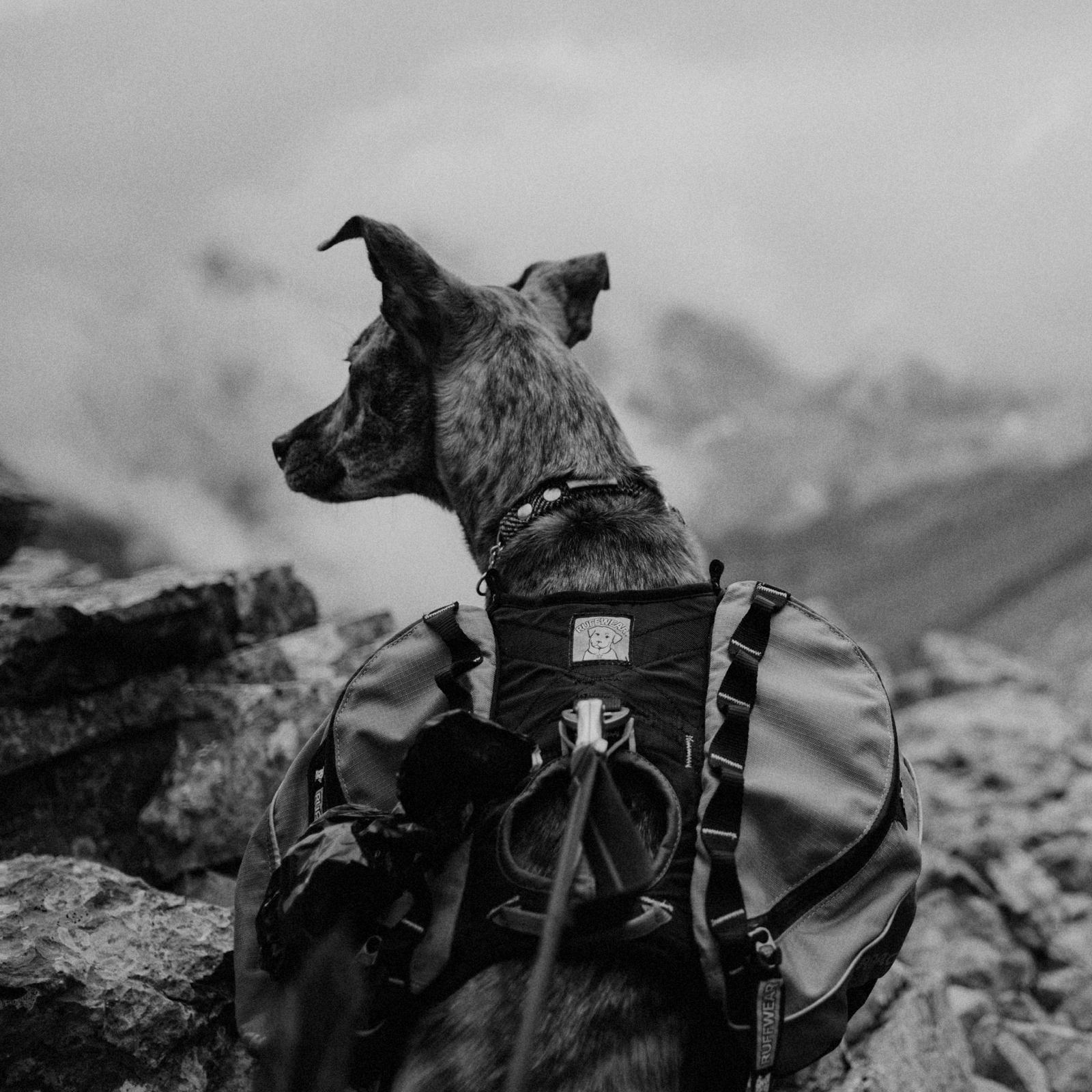 hiking dog banff 10